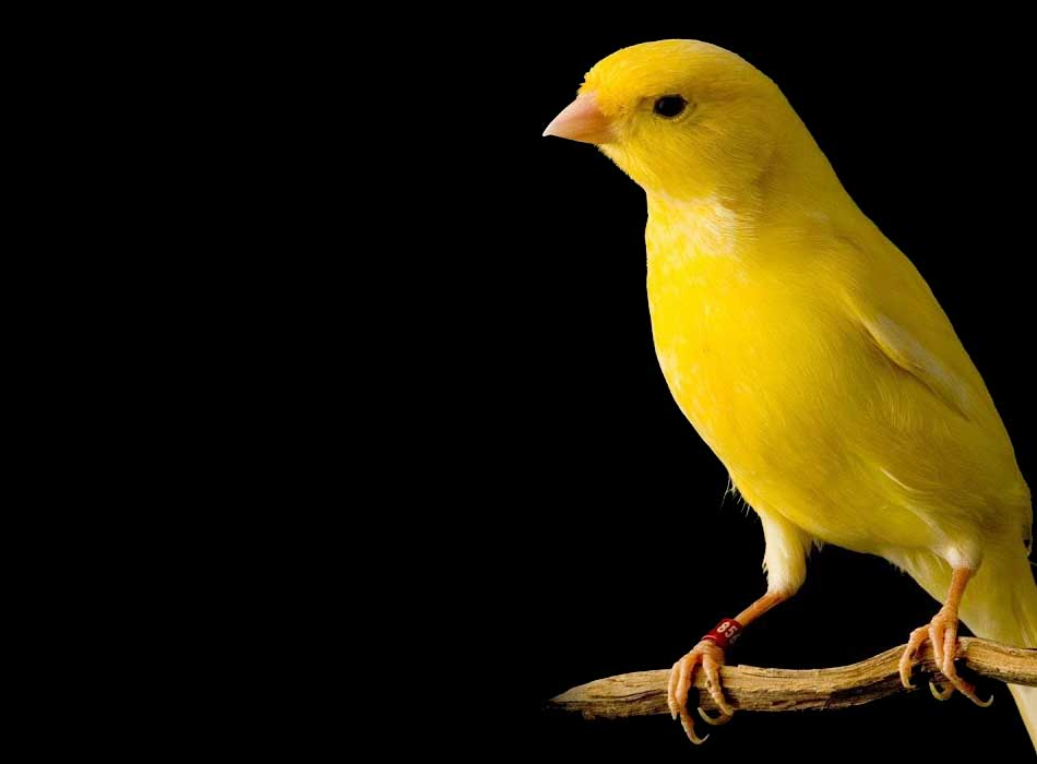 The Canary in The Goldmine of Global Change