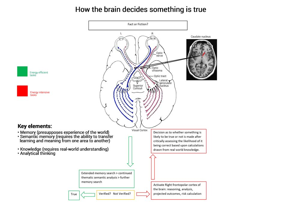 How the brain decides whether something is true or false how search engines establish truth ccuart Gallery